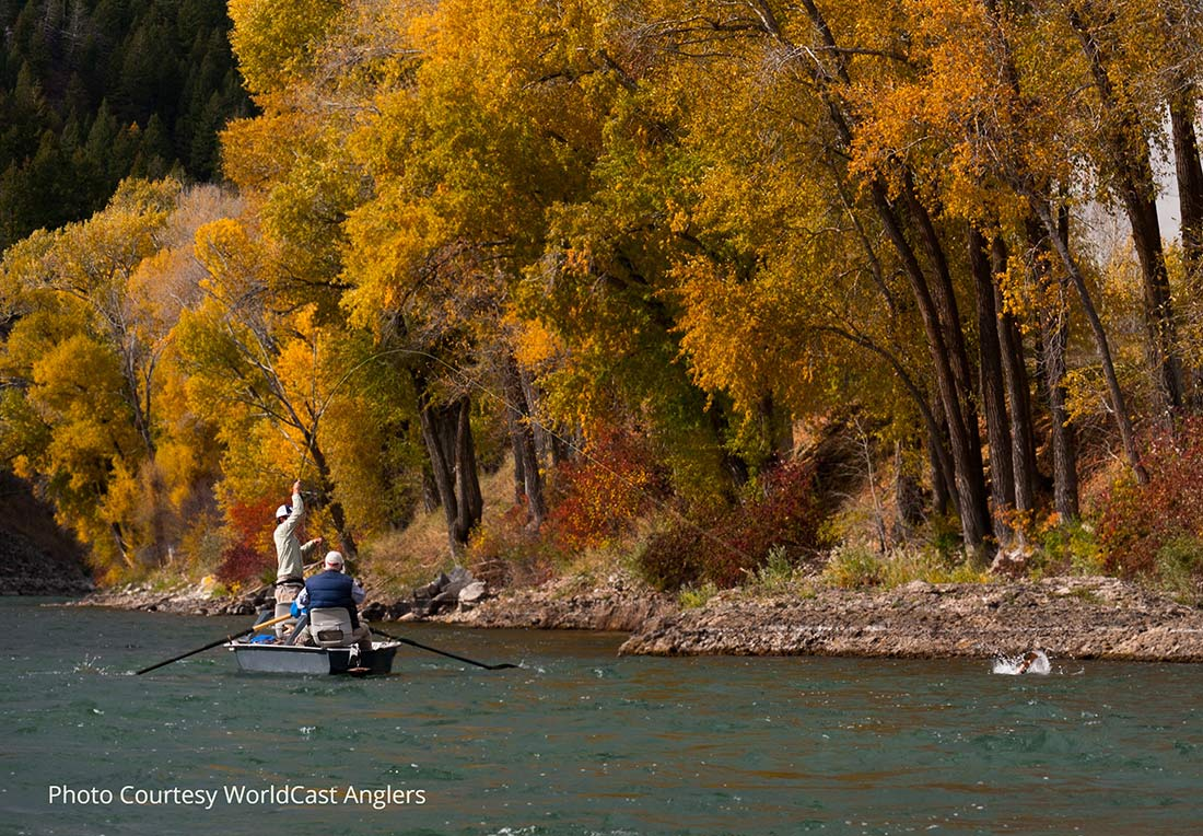 Fly Fishing Outfitters - Snake River Trout